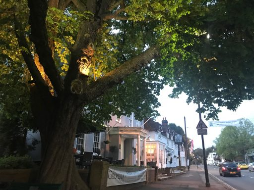 Haslemere Chestnut Tree