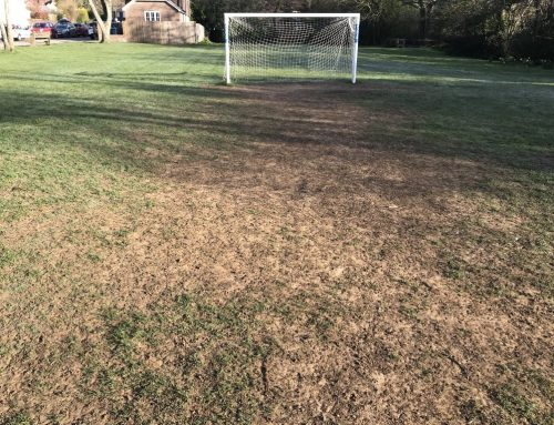 Haslemere – Lion Green Goals