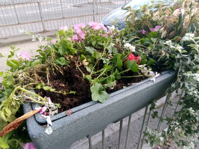 Haslemere Tesco Planters vandalised